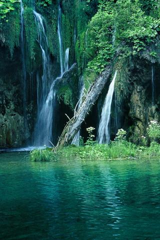 Nature Image Fond Ecran Gamboahinestrosa